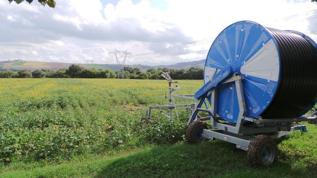 Un campo di soia che viene irrigato con il rotolone.