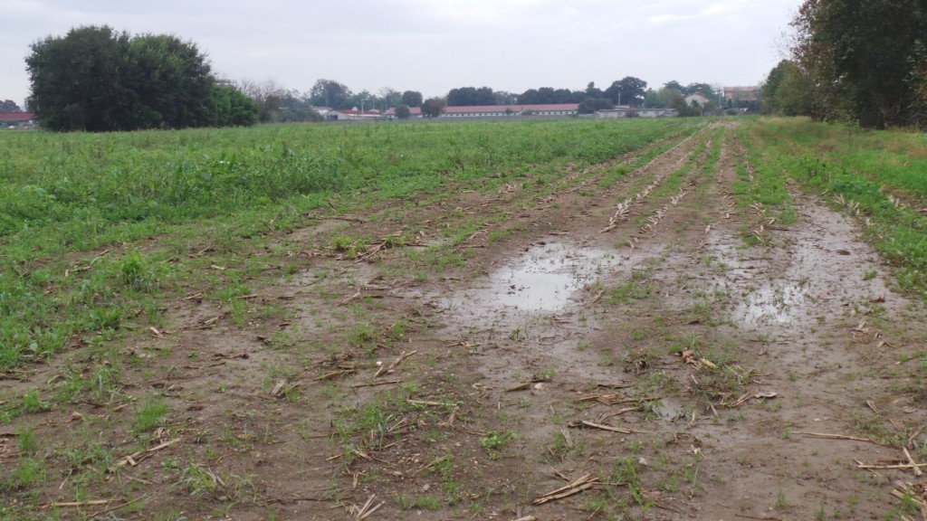 Ecco un appezzamento dove il compattamento del suolo favorisce i ristagni idrici e compromette la buona trafficabilità.