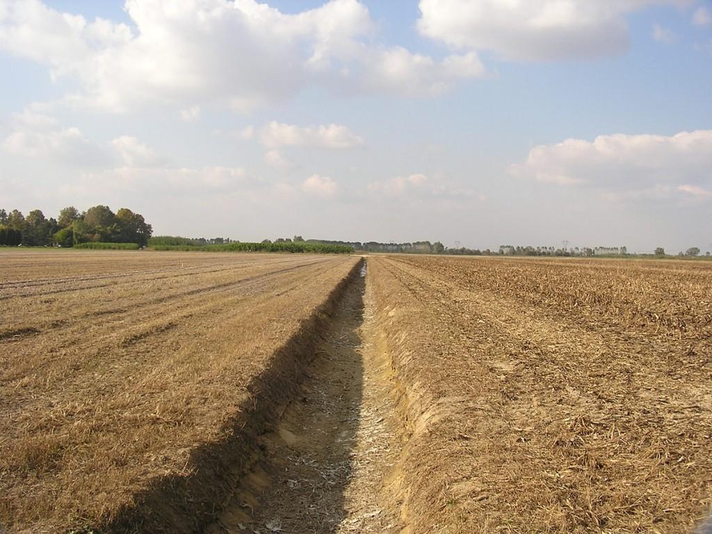 Gli ettari a greening vengono calcolati sulla base dei diritti al pagamento di base.