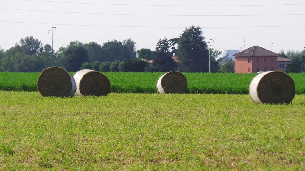 Coloro che faranno gli agricoltori per la prima volta nel 2015 su terreni in affitto possono ottenere i diritti Pac.