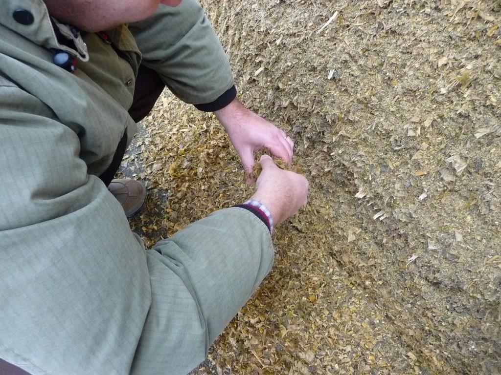 L'allevatore deve monitorare con attenzione il suo silomais per verificare la eventuale presenza di micotossine.