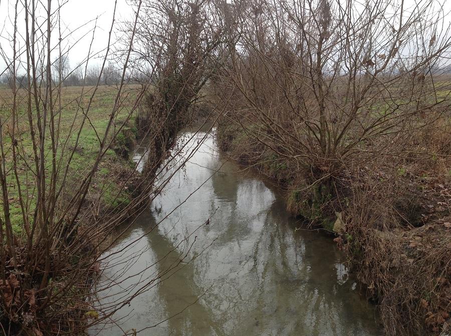 Le colture azotofissatrici nelle aree ecologiche previste dal pagamento greening non potranno essere seminate a meno di 10 metri dal ciglio di sponda dei corpi idrici principali e a meno di 5 metri dalle sponde dei canali secondari.