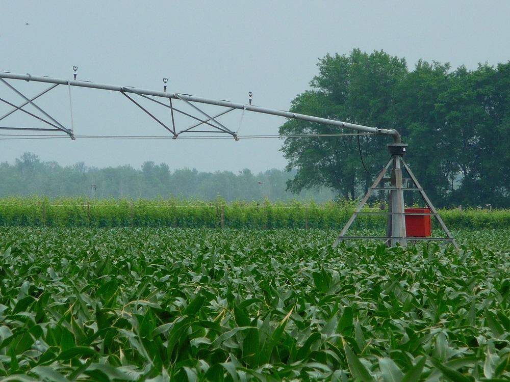 Irrigazione del mais con pivot.