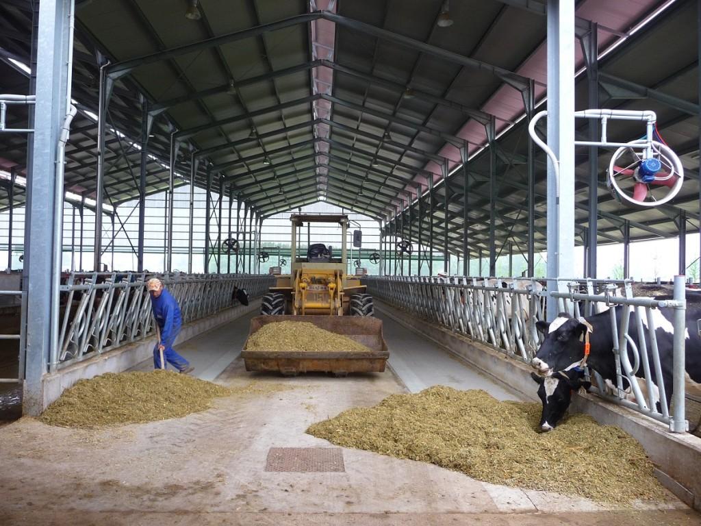 I costi di produzione del latte sono in aumento.
