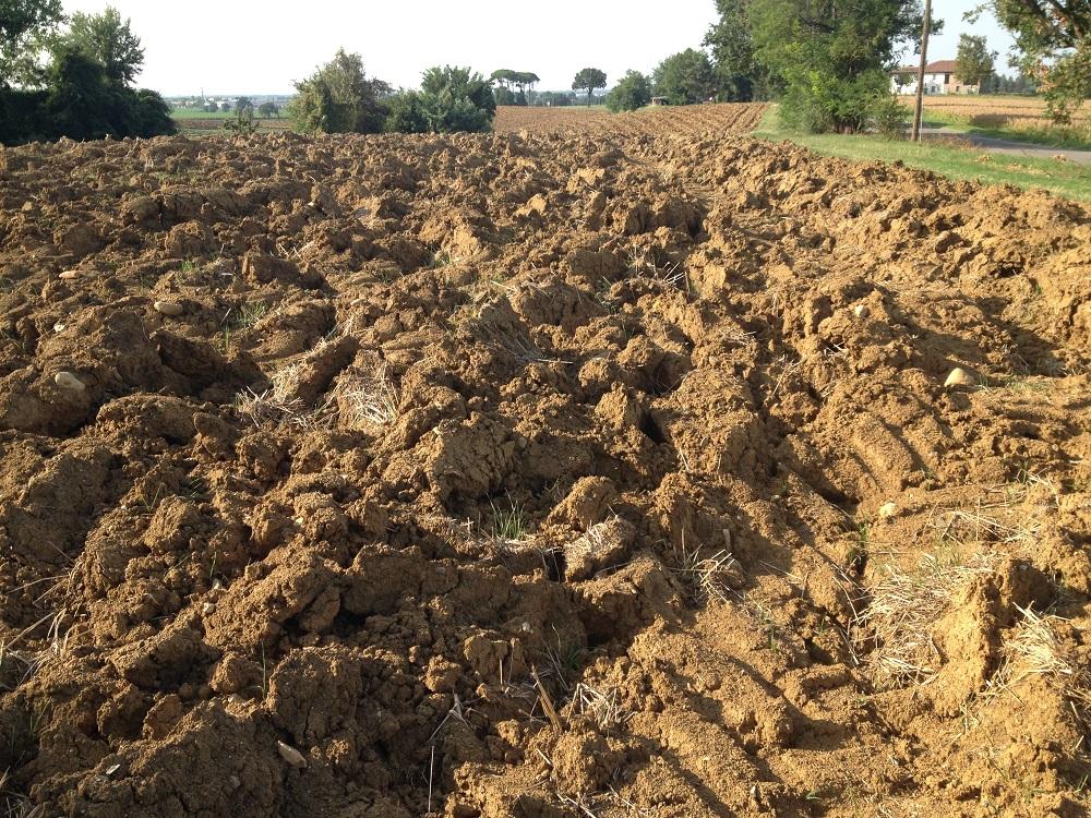 Notare, in basso a destra, l'impronta lasciata dalle ruote del trattore che denota un eccessivo calpestamento del terreno.