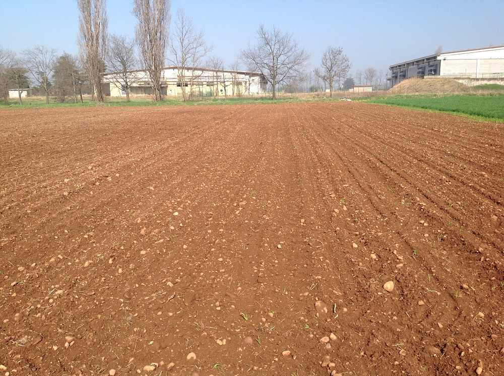 Ecco come si presenta il campo dopo la minima lavorazione con CLC pro e dopo la semina del mais con Optima HD.